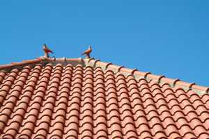 A well maintained roof in spring